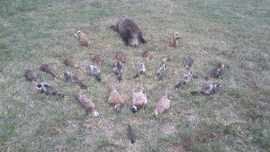 Journée de chasse à Courmemin