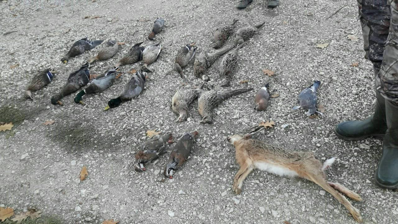 Récit d'un jeune chasseur durant une journée de chasse le 30 septembre à Courmemin